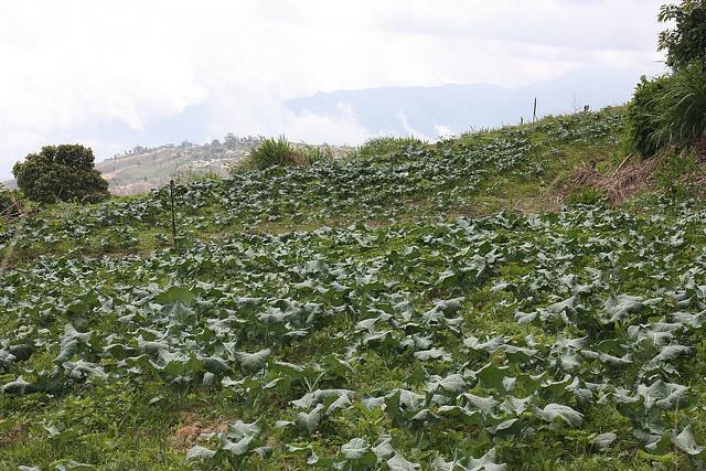 Venezuela investe na produção de sementes agroecológicas