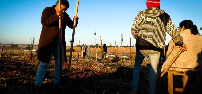 Sem Terra ocupam fazenda de cana no MS