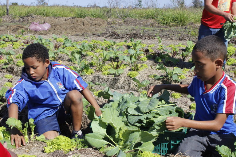 Primeira colheita de Unidade Agroecológica em Maricá é doada a Hospital Municipal