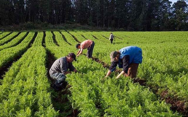 Trabalhadores querem reverter cortes de até 99% nas políticas de agricultura familiar