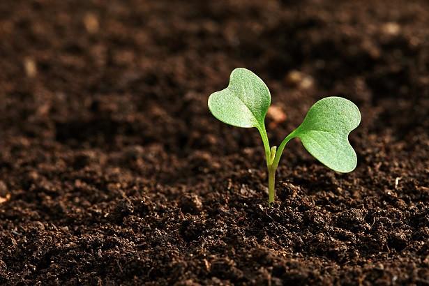 Agroecologia como modo de ser e de viver
