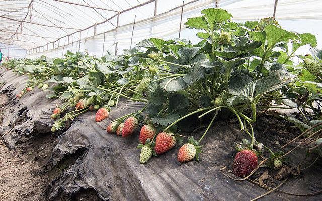 Oficinas comprovam que é possível gerar renda a partir da agroecologia