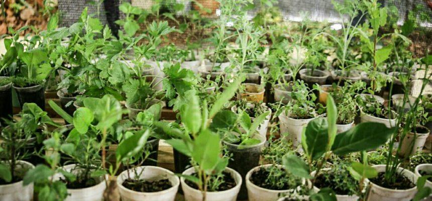 Cuidar da terra, promover a vida e preservar a saúde