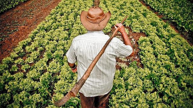 Agricultura familiar é responsável por 70% dos alimentos consumidos no Brasil