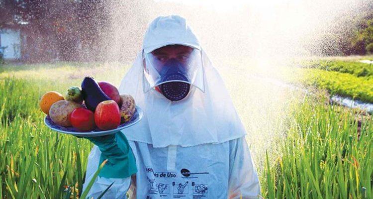 13 motivos para dizer NÃO ao trigo HB4 geneticamente modificado