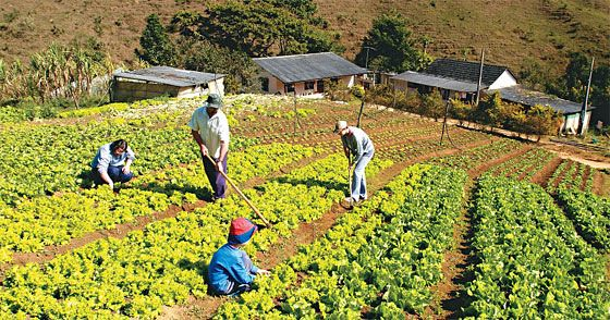 Cortes orçamentários comprometem produção de alimentos no país