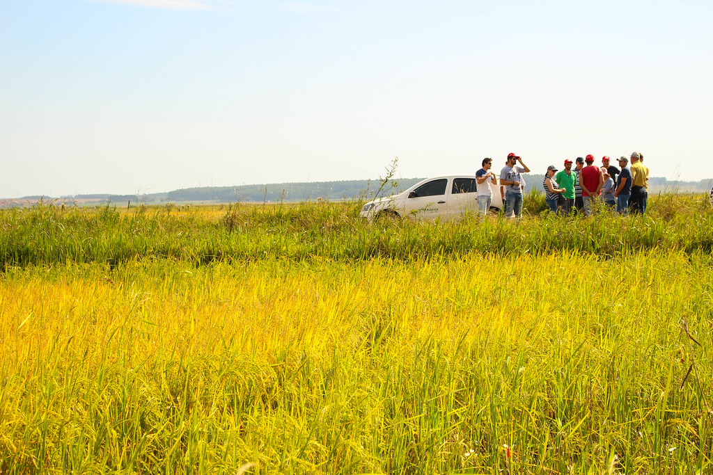 Participantes da conferência estiveram numa lavoura onde é produzido o arroz Terra Livre. Foto Catiana de Medeiros.jpg