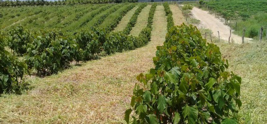 Famílias Sem Terra investem na produção de urucum no extremo sul da Bahia