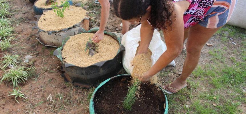 MST incentiva produção de alimentos saudáveis em associação de moradores