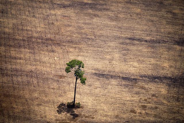Exploração da Amazônia irá aumentar conflitos por terra e dependência do agronegócio