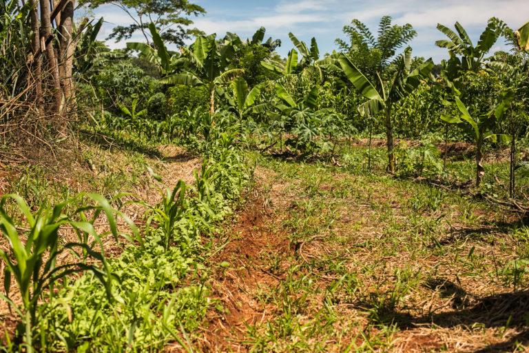hoje brotam alimentos agroecológicos
