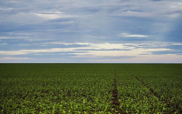 No Brasil, 2 mil latifúndios ocupam área maior que 4 milhões de propriedades rurais