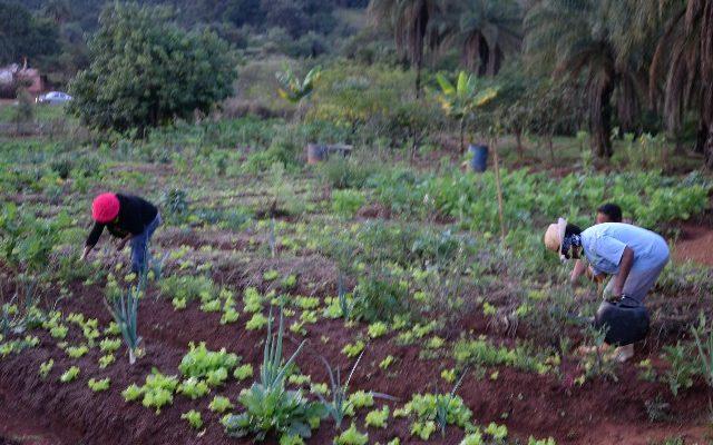 Acampamento produz alimentos orgânicos e livres de veneno