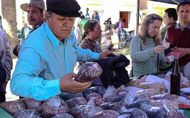 MST produz mais de 50 variedades de feijão orgânico no Rio Grande do Sul