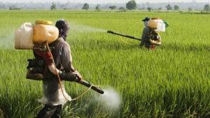 Organizações sociais anseiam que relatório da ONU colabore para enfrentamento à política brasileira do veneno