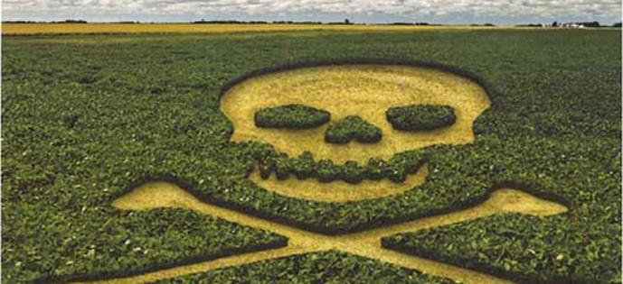Brasil atua na contramão ao aprovar a liberação de mais veneno