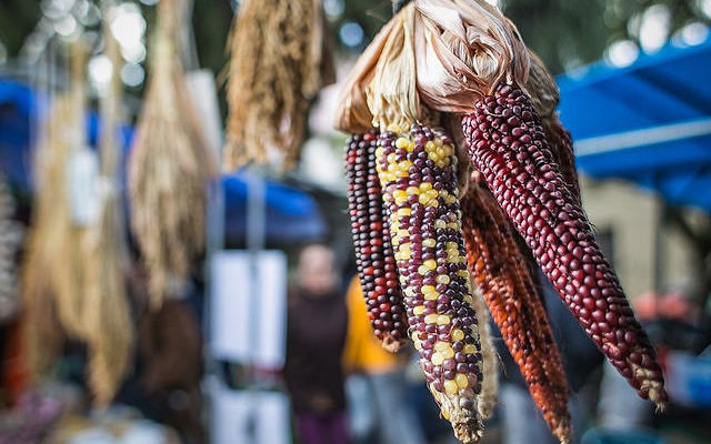 Guardiões de sementes crioulas: uma luta por autossuficiência, sabor e saber