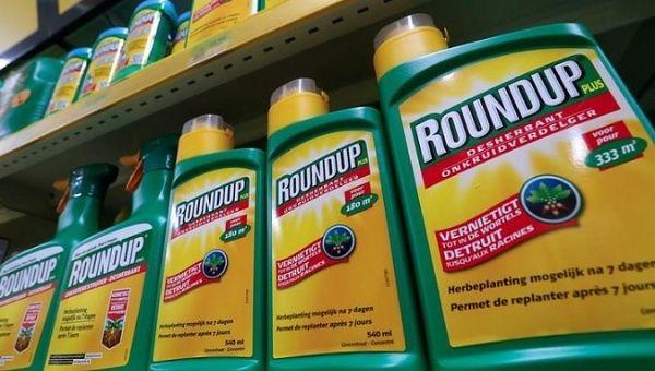 O homem que venceu a Monsanto: 'eles têm de pagar por não serem honestos'