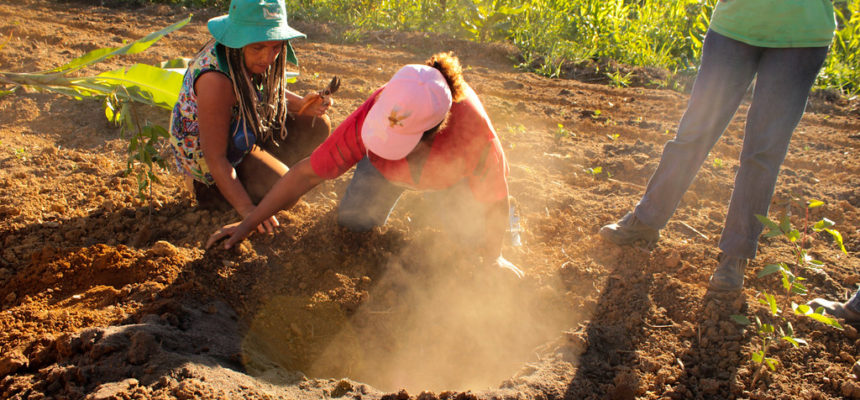 Vale do Rio Doce recebe curso de formação em agroflorestas
