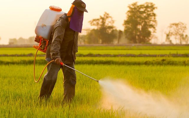 Sob comando da Musa do Veneno, Ministério da Agricultura libera mais 19 agrotóxicos