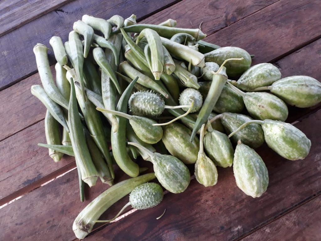 Produção de legumes orgânicos.jpg