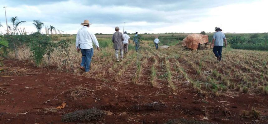 Reintegração de posse ameaça despejar mais de 300 famílias no Paraná