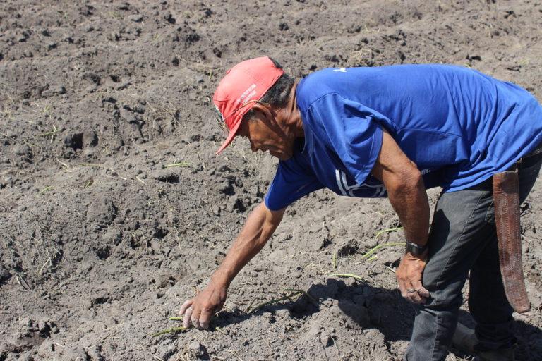 Sem Terra participam de mutirão para construção do Centro de Referência Socioambiental na Ufal