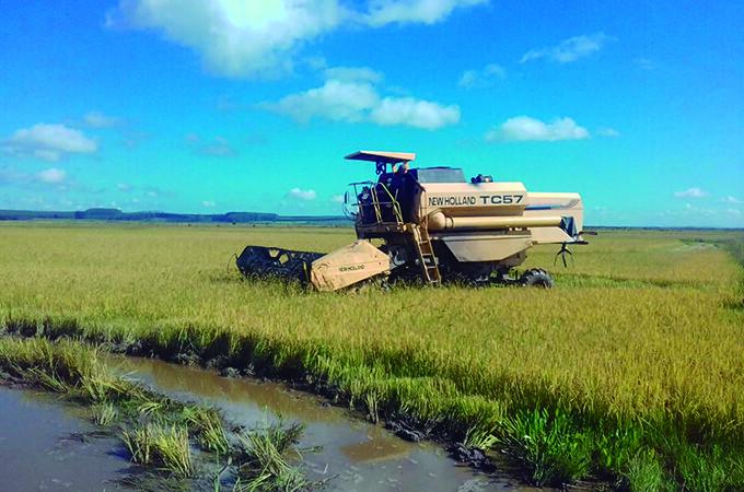 72 famílias de agricultores podem perder 700 hectares de cultivo de arroz orgânico. Foto Divulgação MST.jpg