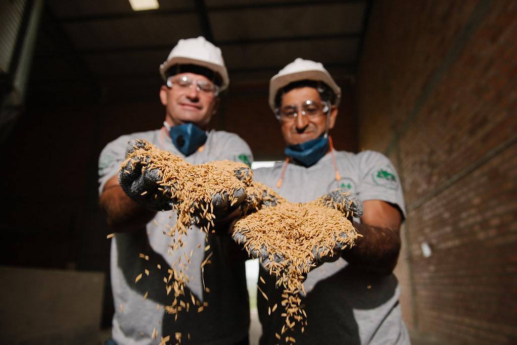 O MST possui unidades próprias de agroindústrias e Unidade de Beneficiamento de Sementes. Foto Alex Garcia.jpg