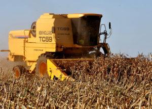 10 filmes para compreender o Brasil do agronegócio
