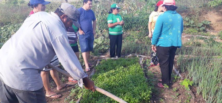 Quintais produtivos e agroecologia no semiárido