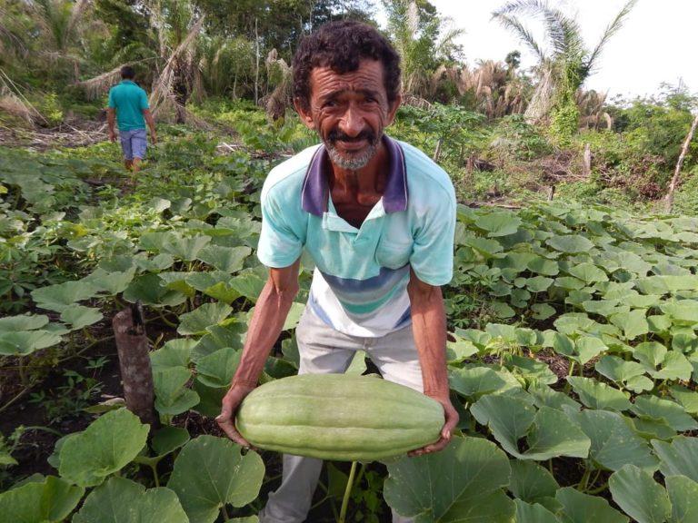 Despejo no Pará ameaça dez anos de produção de alimentos saudáveis