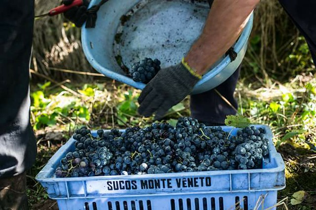 Cooperativismo no campo gera renda para pequenos agricultores