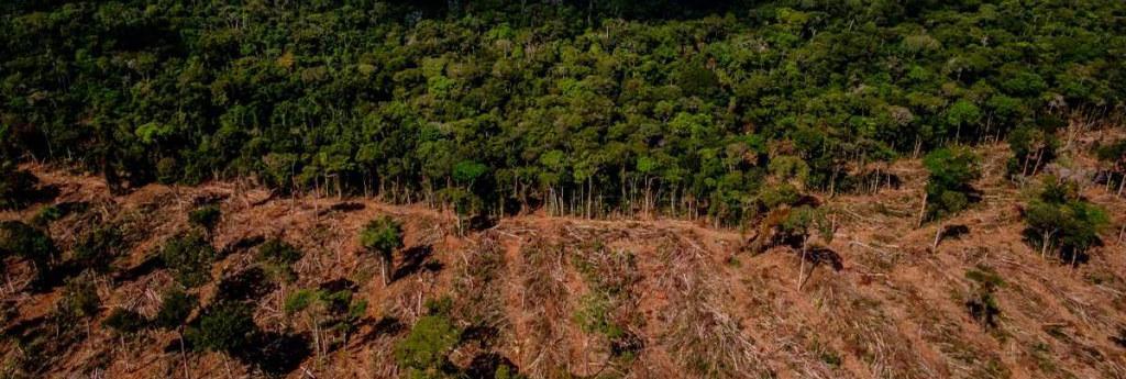 BdF [110] Desmatamento.jpg