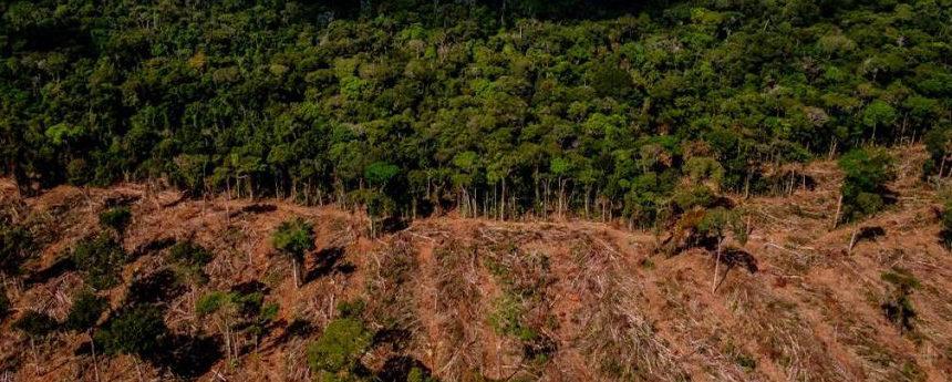 Desmatamento no Cerrado mato-grossense é 95% ilegal