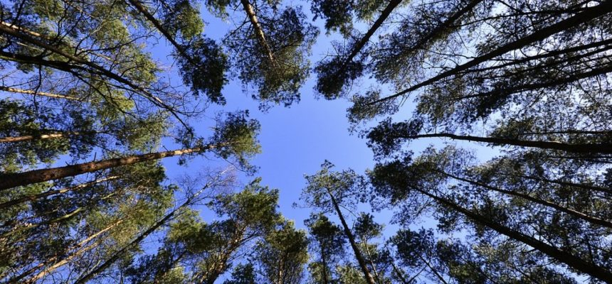 Você entende a importância das florestas para o planeta e para a humanidade?