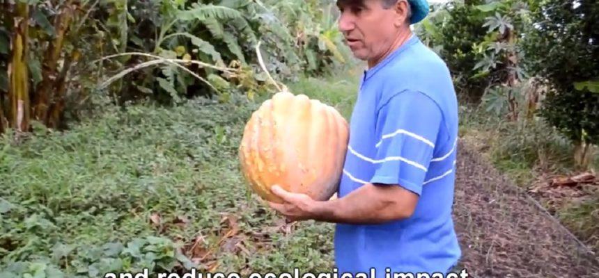 Curta sobre produção agroecológica do MST é finalista em prêmio da ONU