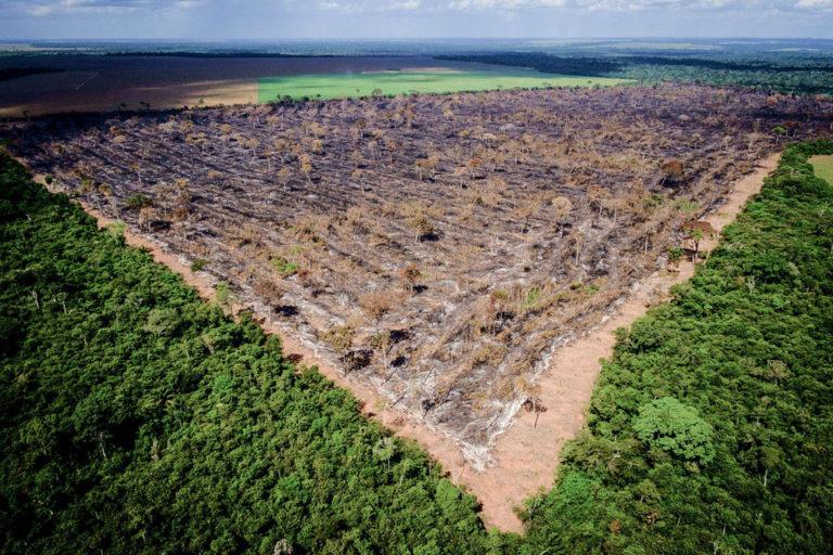 queimadas e desmatamentos