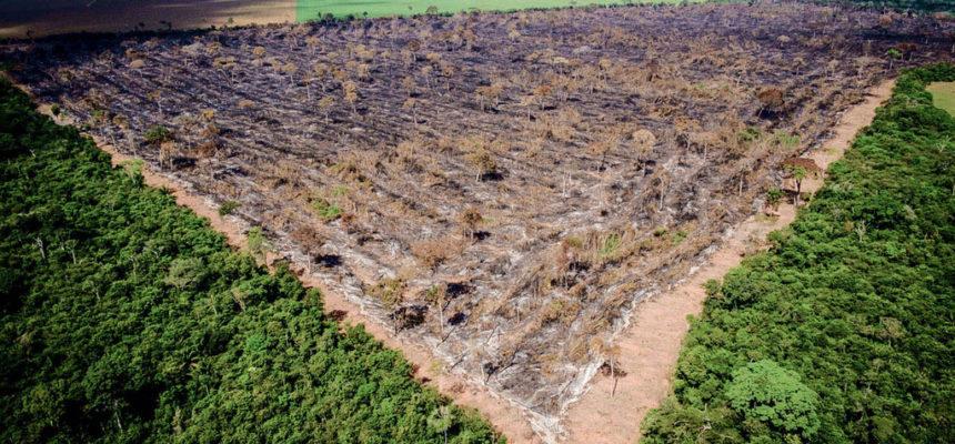 Precisamos falar sobre mudanças climáticas, queimadas e desmatamentos