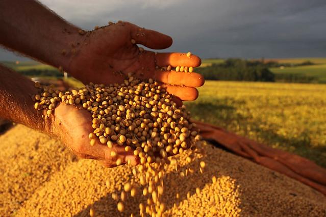 CNA e ruralistas atacam liberação de agrotóxico que mata lavouras