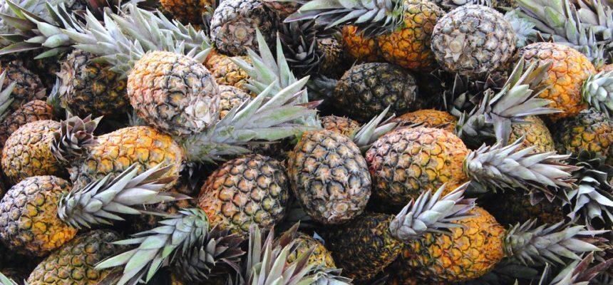 Feira em Alagoas realiza conferência sobre alimentação saudável em praça pública