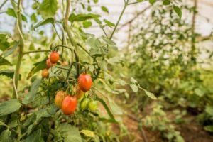 Filme sobre agroecologia e MST é exibido na Cúpula Climática da ONU