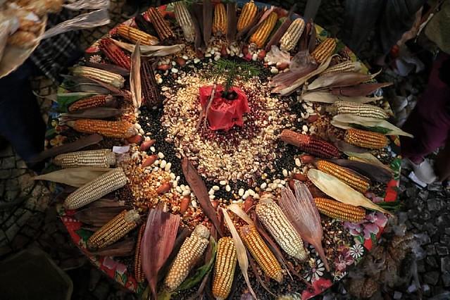 [175] Dezenas de variedades de semente crioulas de milho compartilhas durante encontro de guardiãs e guardiões. Giorgia Prates.jpeg