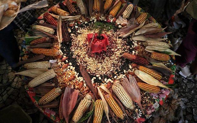 Guardiãs e guardiões de sementes crioulas partilham grãos como forma de resistência