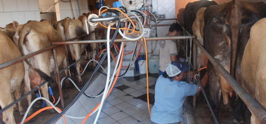 Novas regras inviabilizam a produção de leite no país