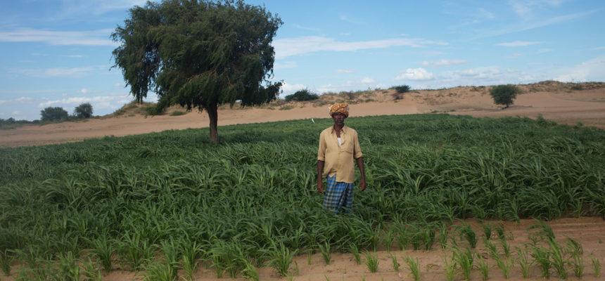 Índia chega a mais de 300 mil suicídios de agricultores, aponta dossiê