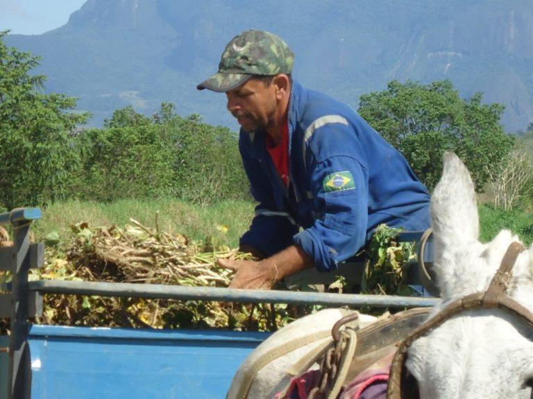 Assentamento PDS Osvaldo de Oliveira é referência na produção de feijão agroecológico