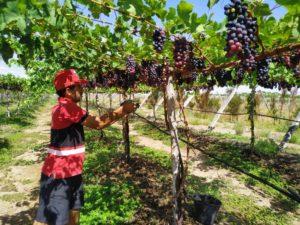 Famílias resistem no campo através da produção de alimentos saudáveis