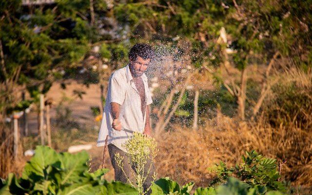 Terra Crioula: cesta da reforma agrária terá primeira edição no norte fluminense