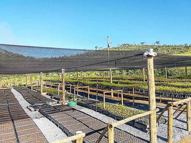 viveiro na ocupação deve produzir as mudas em Ariadnópolis - foto divulgação MST.jpg